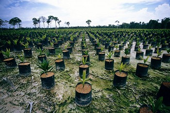 Forest protection Brazil
